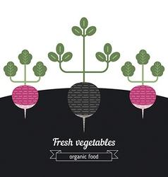 Radish and black radish vegetables vector