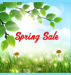 natural background with word spring sale vector image vector image