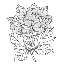 PeonyColoring book page for adults Hand vector image vector image
