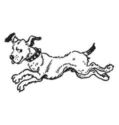 Dog running vintage vector