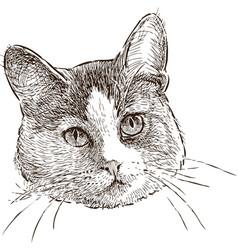 Head a domestic cat vector