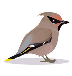 waxwing bird vector image