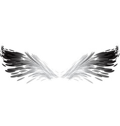 abstract black and white wings vector image vector image