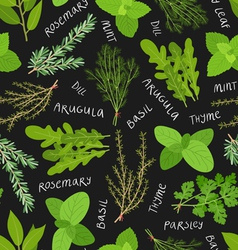 Herbs pattern vector image