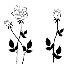 black rose and buds in graphic style vector image vector image