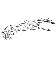 Sketch beautiful eagle on a white background vector image vector image