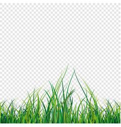 a green grass field vector image