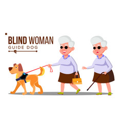 blind old woman with dark glasses cane in hand vector image
