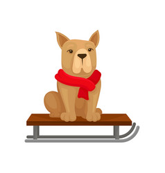dog in red warm scarf sitting on sled home pet vector image