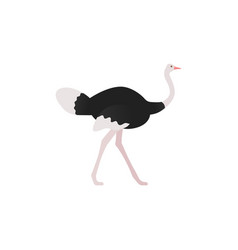 ostrich standing in flat design vector image