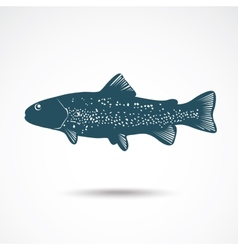 Rainbow trout vector
