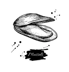mussel hand drawn engraved vector image vector image