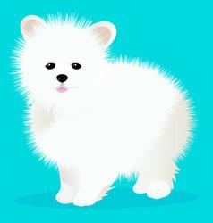 Spitz dog white vector