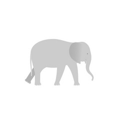 elephant zoo animal in flat design vector image