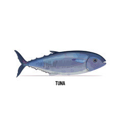 fresh tuna fish isolated on white background vector image