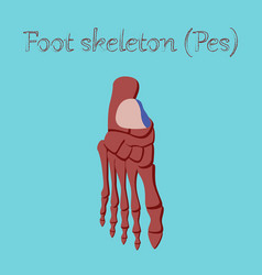 Human organ icon in flat style foot skeleton vector