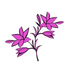 Lily on white background vector image