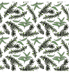 Seamless endless pattern of rosemary branch and vector