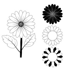 Sunflower drawing black and white vector