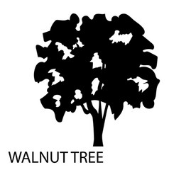 Walnut tree icon simple style vector