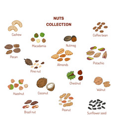 set of nuts and seeds vector image