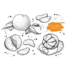 hand drawn mandarin set Engraved vector image