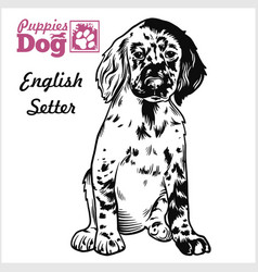 english setter puppy sitting drawing hand vector image