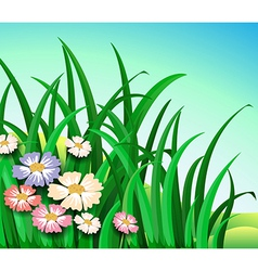 Green plants with colorful flowers vector image