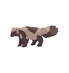 Raccoon dog arctic polar animal vector