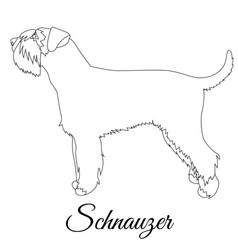 schnauzer outline vector image