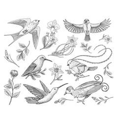 small hummingbird birds of barn swallow set or vector image