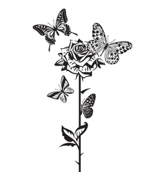 Butterflies and rose vector