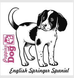 English springer spaniel puppy drawing hand vector