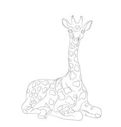 giraffe sits lines vector image