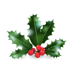 holly decor element vector image