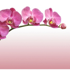 Orchid flower background vector image