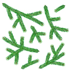 Spruce twigs vector
