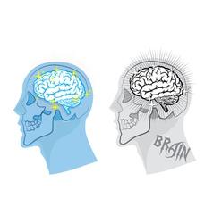 bright brain in skull vector image