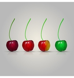 four cherries vector image vector image