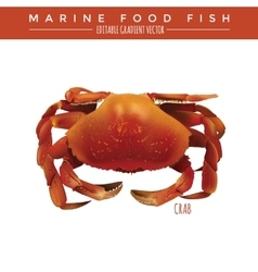 Crab Marine Food Fish vector image