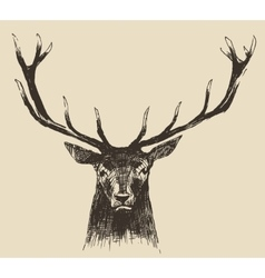 Deer Head Vintage Hand Drawn vector
