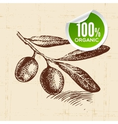 Hand drawn sketch vegetable olive Eco food vector