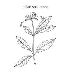 Indian snakeroot rauwolfia serpentina medicinal vector
