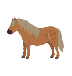 Red pony in flat design vector