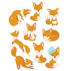 Set of cartoon foxes collection of cute foxes vector
