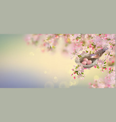 spring apple blossom vector image