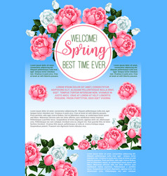 spring rose flowers greeting poster template vector image