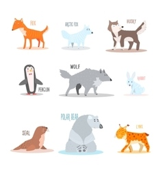 Arctic and Antarctic Animals Penguin vector image