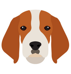 isolated beagle avatar vector image vector image