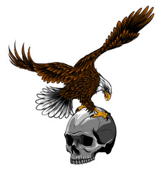 eagle and skull design art vector image